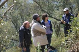 Traditional olive grove