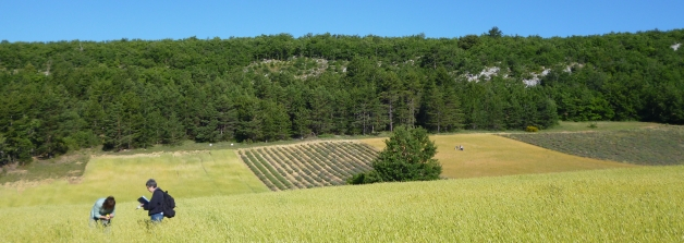 Crop sampling in Haute Provence